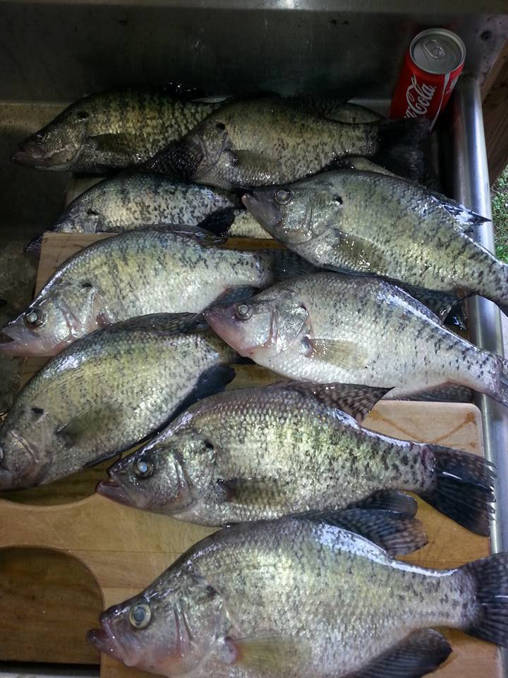 Now this is a pile of giant slab crappies.